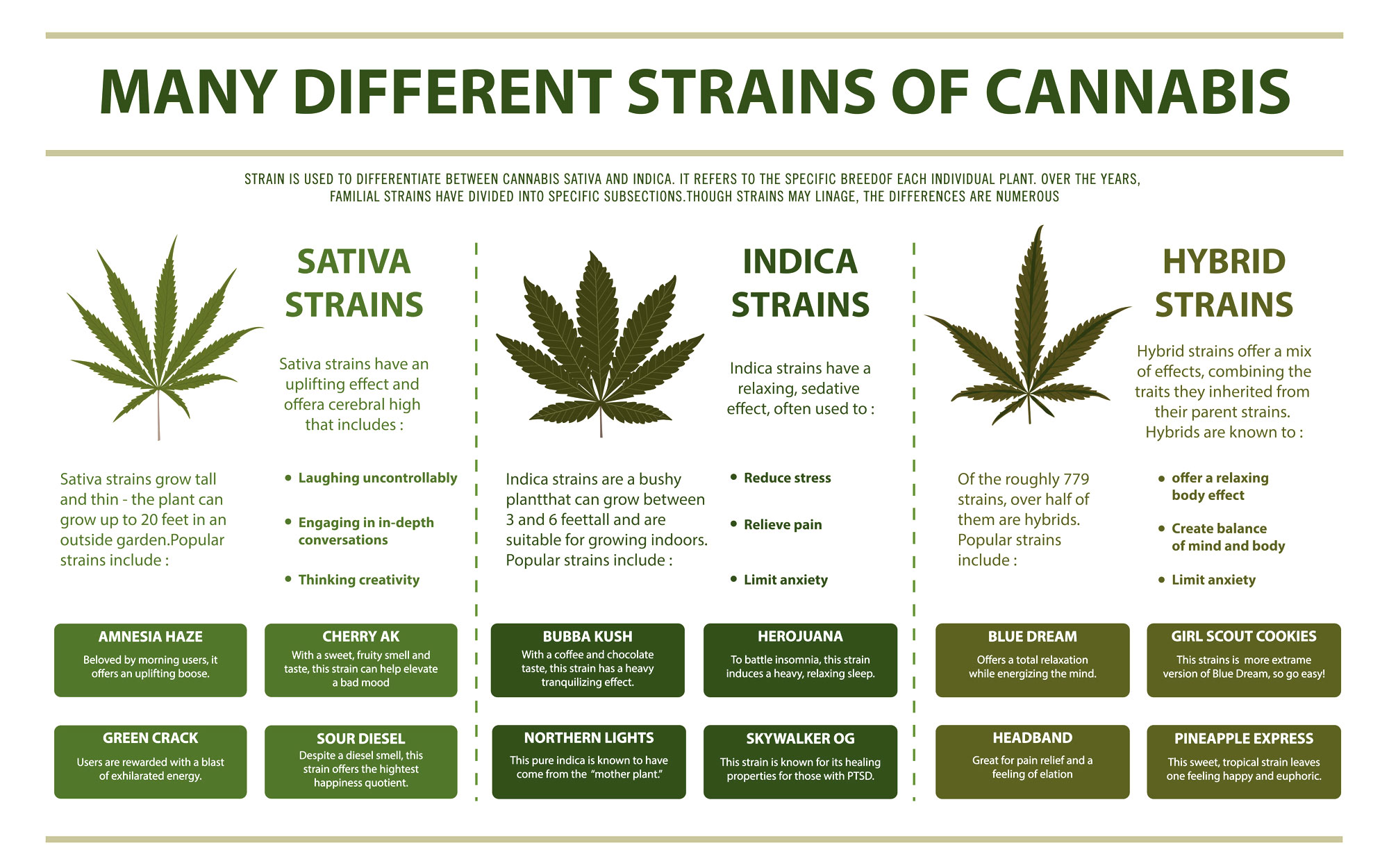 chart illustrating the many different strains of cannabis