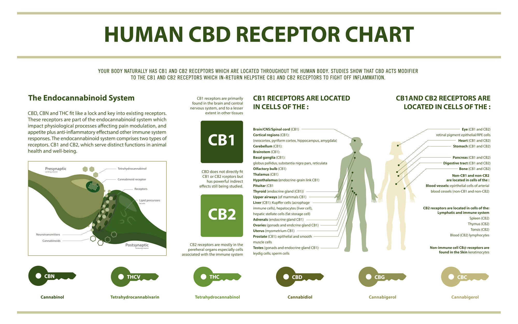 slide chart illustrating the human CBD receptors